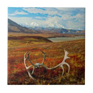 アラスカのツンドラのカリブーの(雄ジカの)枝角 正方形タイル小