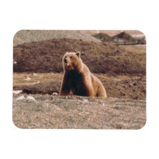 アラスカのツンドラハイイログマの雌豚の北極冷却装置 マグネット