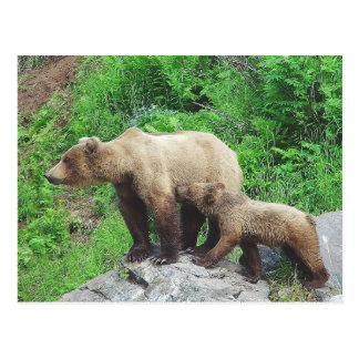 アラスカのヒグマ ポストカード