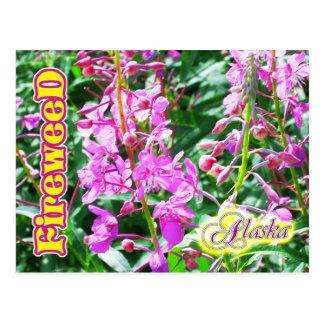アラスカのピンクのFireweedの花 ポストカード