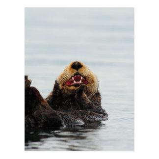 アラスカのラッコ ポストカード