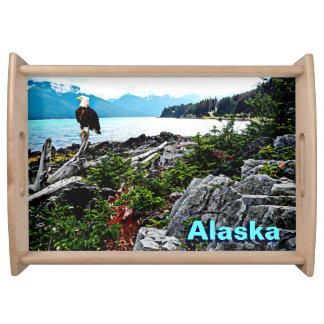 アラスカの海岸の白頭鷲 トレー
