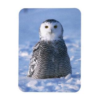 アラスカの設計されている北極冬のSnowyのフクロウ マグネット
