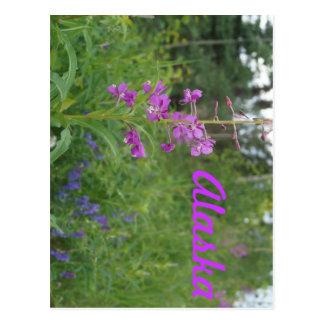 アラスカのFireweed ポストカード