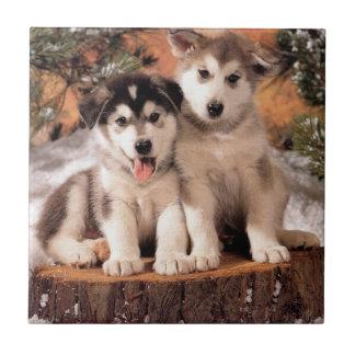 アラスカンマラミュートの子犬のタイル 正方形タイル小