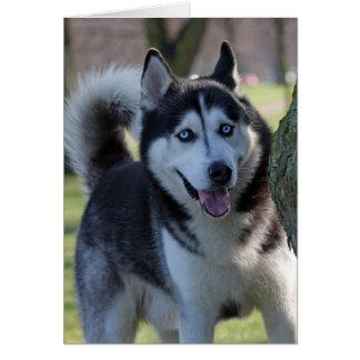 アラスカンマラミュート犬のブランクの挨拶状 カード