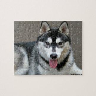 アラスカンマラミュート犬の写真 ジグソーパズル