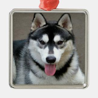 アラスカンマラミュート犬の写真 メタルオーナメント