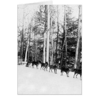 アラスカ犬のSledding カード
