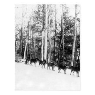 アラスカ犬のSledding ポストカード