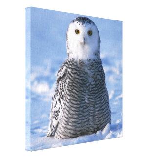 アラスカ設計されている北極Snowyのフクロウの写真 キャンバスプリント