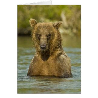アラスカ。 Katmai NP。 沿岸ヒグマの魚釣り カード