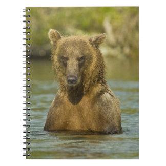 アラスカ。 Katmai NP。 沿岸ヒグマの魚釣り ノートブック