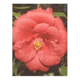アラバマのツバキ(赤い) ポストカード