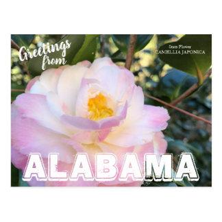 アラバマの州花、ツバキの郵便はがき ポストカード