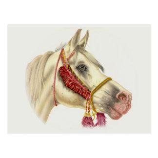 アラビアの種馬 ポストカード