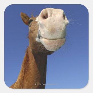 アラビアの馬、ババリア、ドイツ スクエアシール