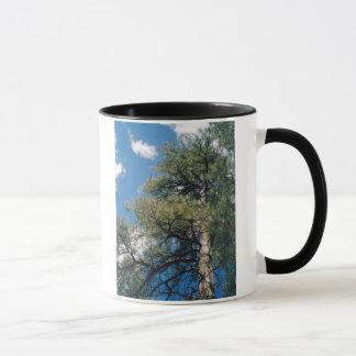 アリゾナのマツ マグカップ