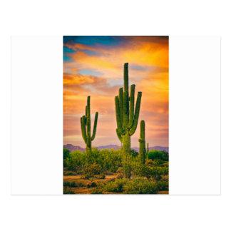 アリゾナの生命 ポストカード