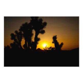 """""""アリゾナの砂漠""""の日没の景色の写真撮影 フォトプリント"""