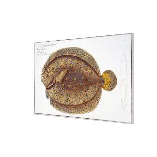 アルゴスのもがき(Pleuronectesアルゴス)のプレートXLVI キャンバスプリント