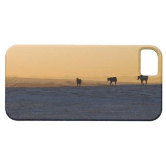 アルバータ、カナダ3 iPhone SE/5/5s ケース