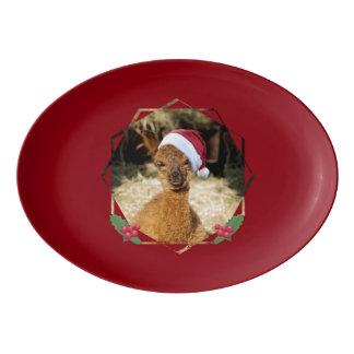 アルパカのクリスマスの大皿 磁器大皿