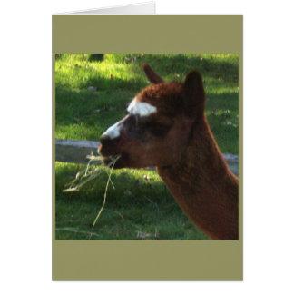 アルパカのメッセージカード カード