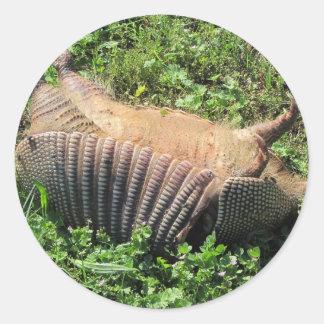 アルマジロの道殺害- Dasypodidae ラウンドシール