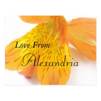 アレキサンドリア ポストカード