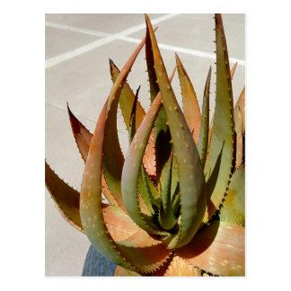 アロエの植物の郵便はがき ポストカード