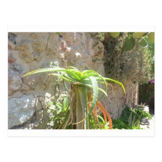 アロエの植物 ポストカード