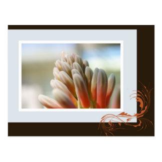 アロエの花のスパイク ポストカード