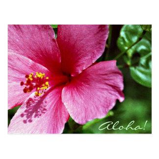 アロハ! ピンクのハイビスカス ポストカード