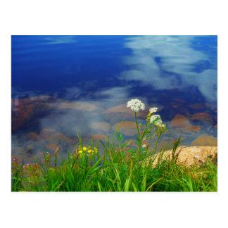 アン女王のレースは、青い山湖開花します ポストカード