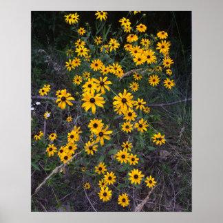 アーカンソーの野生の花の黒目のSusansの郵便はがき ポスター