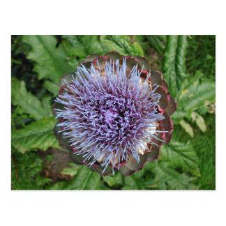 アーティチョークの花を開けて下さい。 紫色 ポストカード