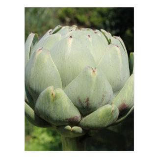 アーティチョーク植物 はがき