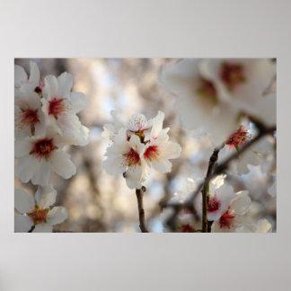 アーモンドの花ポスター ポスター