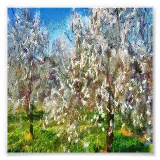 アーモンド果樹園の花 フォトプリント