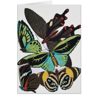 アール・デコの蝶 カード