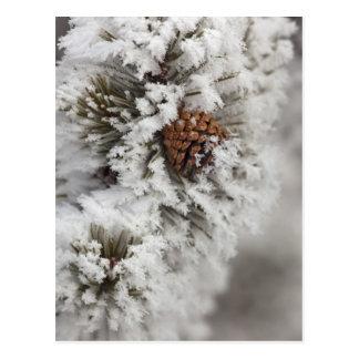 イエローストーンの冬のLodgepoleマツ円錐形 ポストカード