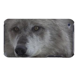 イエローストーンの国民からのオオカミ(Canusのループス) Case-Mate iPod Touch ケース