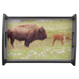 イエローストーン国立公園のバイソンそして子牛 トレー