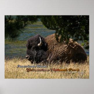 イエローストーン-アメリカ野牛ポスター ポスター