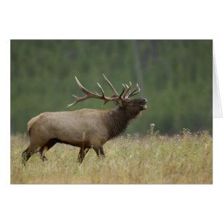 、イエローストーンNP bugling、Bullのオオシカワイオミング カード