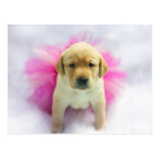 イエロー・ラブラドール・レトリーバーの子犬 ポストカード