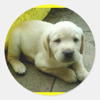 イエロー・ラブラドール・レトリーバーの子犬 ラウンドシール