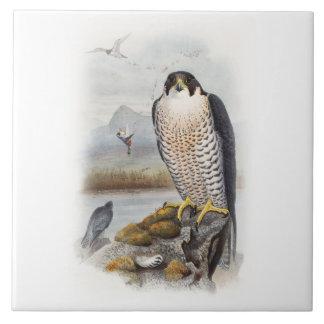 イギリスのハヤブサのジョンGouldの鳥 タイル