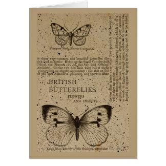イギリスの蝶 カード